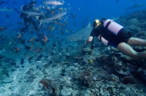 Ambergris Caye Barrier Reef
