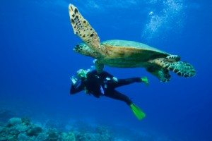 Scuba Diving on Ambergris Caye